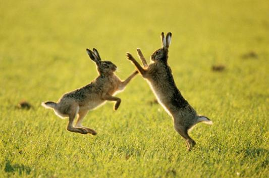 two-rabbtis